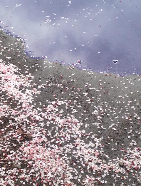 Petals.Sky
