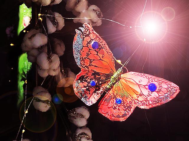 Orange.Butterfly
