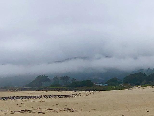 Pelican.Beach